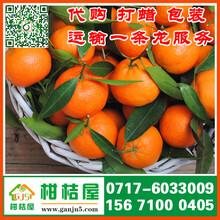 南通农副产品特早柑桔代收价格_农副产品早熟桔子市场行情