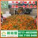 江苏农副产品特早蜜橘供应产地_农副产品早熟密桔集贸市场