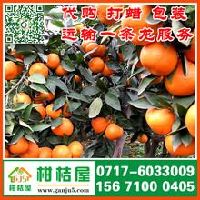 泰州海陵区特早柑橘价格行情_海陵区特早柑桔蔬菜瓜果