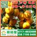 扬州城东路特早密橘销售价格_城东路早熟橘子果品批发