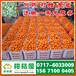 海东民和特早桔子销售价格_民和早熟蜜橘蔬菜水果
