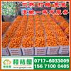 苏州市南环桥果品特早柑桔供应产地_南环桥果品早熟蜜橘水果市场