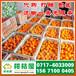 兴安盟农副产品特早蜜桔产地直销_农副产品早熟桔子蔬菜水果