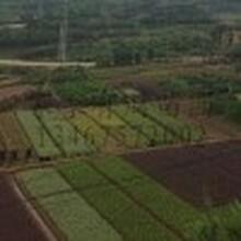 自产自销直接出售价格更优惠的绿化苗木