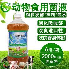 竹鼠养殖喂一些em益生菌对预防拉稀有没有好处图片