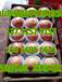 萧县苹果批发产地新红星苹果多少钱一斤