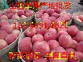 广州水果批发价格红富士苹果供应山东苹果产地批发价格图片