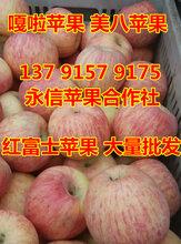 冰糖心富士苹果产地最新价格0.5元起图片