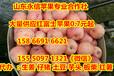江苏烟台苹果基地批发价格