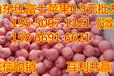 新疆红富士苹果基地批发价格