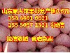 河南红富士苹果批发市场