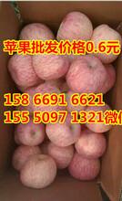 山东苹果产地最新红富士苹果供应图片