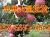 济南山东苹果行情趋势