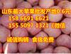 广东水果批发市场苹果行情趋势