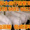 芜湖县大约克仔猪批发市场今日仔猪批发价格