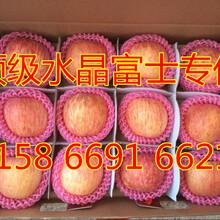 最新红富士苹果供应价格、山东红富士苹果经销商图片