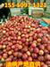 莆田水晶富士苹果价格