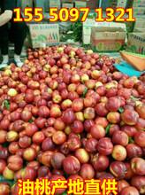 安阳烟台红富士苹果价格表图片