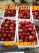 龙海优质红富士苹果图片