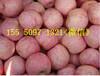 湛江红富士苹果产地条纹红富士苹果价格