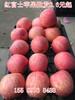 鄂州红富士苹果价格