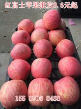 湖南红富士苹果产地湖南条纹80红富士苹果批发价格图片