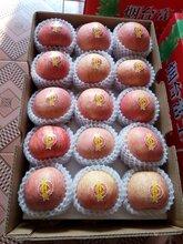 吴忠苹果产地常年供应烟台富士苹果红星苹果红将军苹果图片