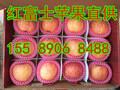 全椒县临沂苹果代办产地冷库红富士苹果价格图片
