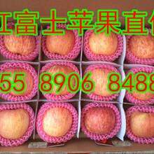 台山冰糖心富士苹果山东苹果产地在哪里图片