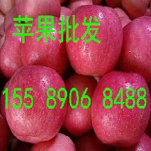 山东苹果产地山东苹果价格红富士苹果批发0.5元图片
