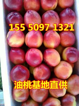 阜南县红富士苹价格临沂诚信购销苹果产地