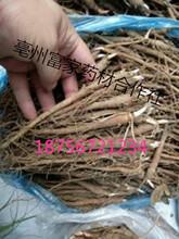 安徽亳州赤芍苗种植基地