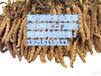 东莞莞城专业回收虫草,东莞莞城哪有回收虫草,莞城回收冬虫夏草价格