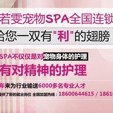 北京大兴宠物美容师培训教程