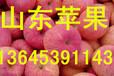 山东红富士苹果报价