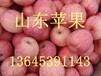 供应山东苹果基地在哪/山东苹果价格