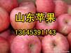 供应山东苹果价格绿果网