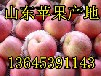 山東蘋果基地批發膜袋紙紙加膜紅富士價格