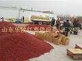 乐陵红枣山东大枣金丝枣产地优质货源图片
