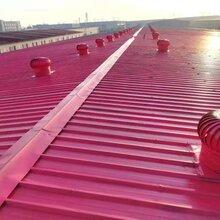 彩钢顶翻新彩钢板翻新油胶施工应用图片