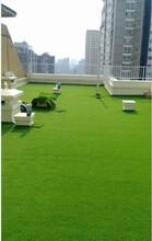 北京假草坪哪里有卖塑料草坪直销图片