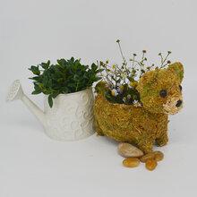 16A077草编装饰收纳青苔编织小熊带框草编工艺品摆件图片