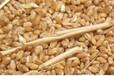 四川绵竹酒厂大量求购小麦