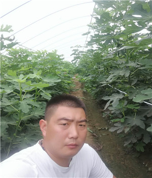 石景山丰香草莓苗便宜基地