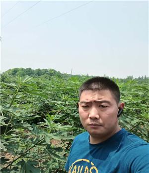 防城港颊丰草莓苗报价