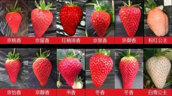防城港红颊草莓苗管理方法