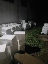 防城港明宝草莓苗便宜供应