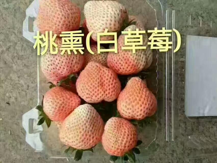 平谷甘王草莓苗便宜