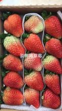 中卫林玉草莓苗图片