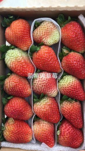 石景山夏秋草莓草莓苗供应